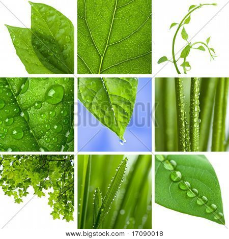 collage of fresh green leaves