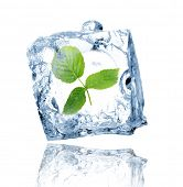 picture of ice cube  - Green leaves in ice cube - JPG