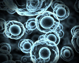 stock photo of prophase  - Abstract cells in mitosis or multiplication of cells - JPG