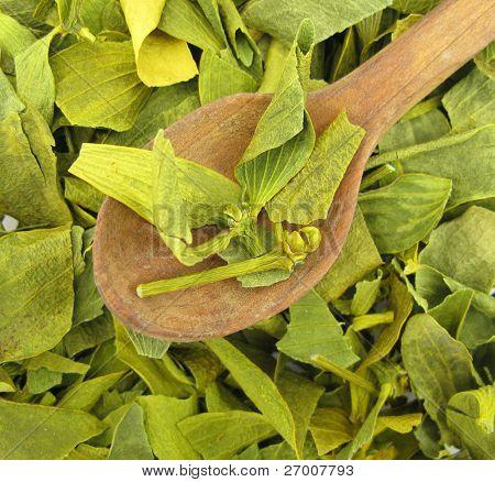 Mistletoe dried leaves