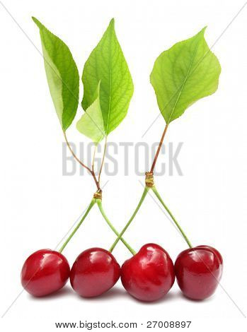 Four cherries with leaves