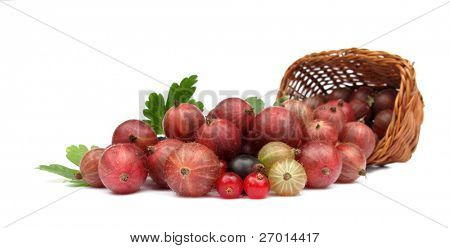 Berries currant red redcurrant gooseberry black currant blackcurrant wild fruits