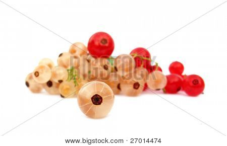 Redcurrant red currants and white currants
