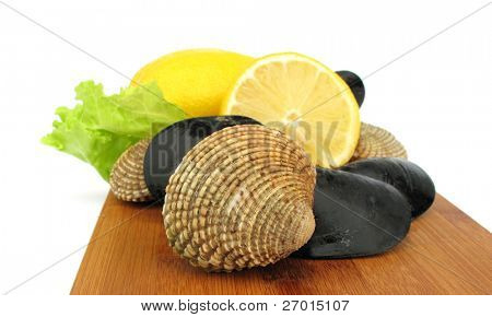 Edible shell mollusc warty venus and mussels