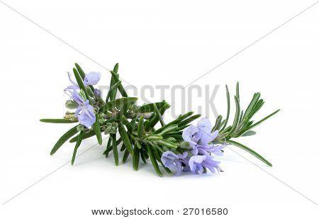 Rama de Romero y flores