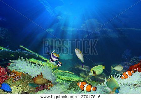 Peixe no mar