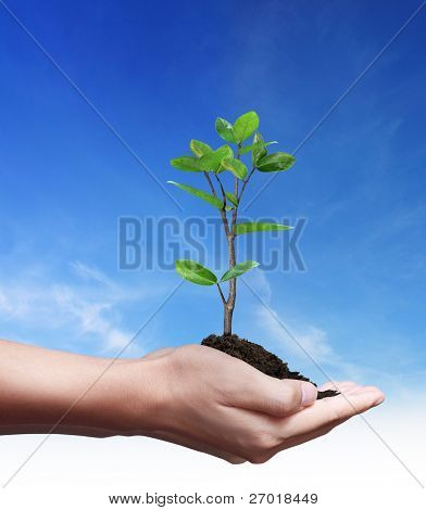Man hand holding young plant