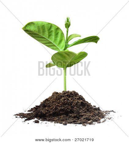 Pflanzen weiß background