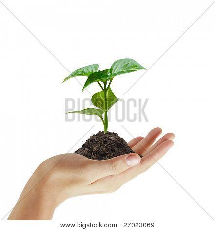 planta de la mano