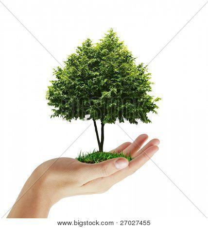 planta de la mano, árbol