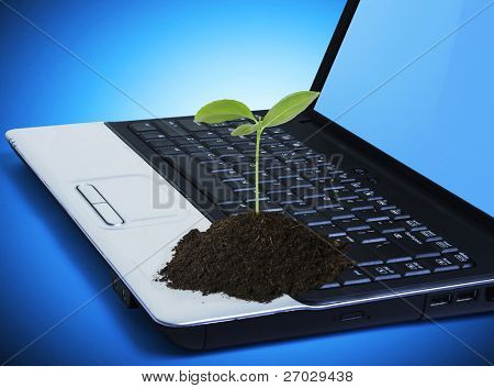 Pflanzen Sie auf einer Laptop-Tastatur