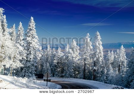New Mexico Mountain Winter Trees With Snow