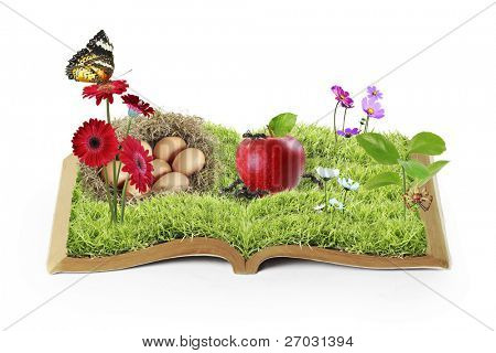 flowers on the grass, growing from a book