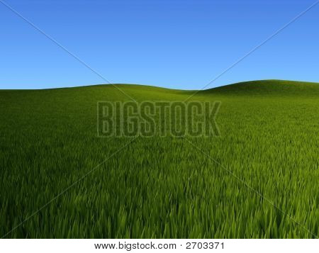 Grass Fields