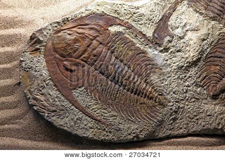 exploration of trilobite beetle fossil embedded in stone Rock