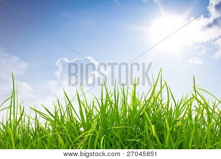 Fresh spring green grass and blue sky