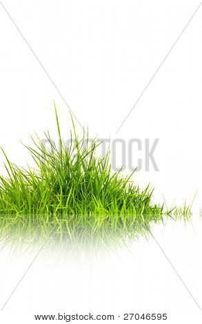 Green grass with reflection isolated on white background.
