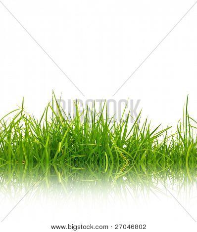 Verde hierba con reflexión aislado sobre fondo blanco.