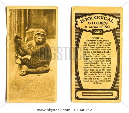 UNITED STATES OF AMERICA - CIRCA 1970: A Postcard printed in the United States shows image Gorilla, circa 1970