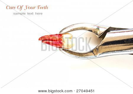 Extraction of tooth with Dental tools and equipment on white background with copy space.