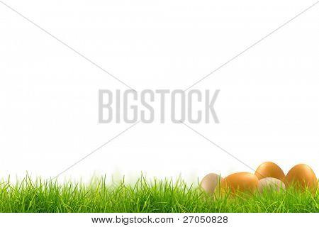 Ovos de Páscoa no panorama de grama verde primavera fresca isolado no fundo branco.