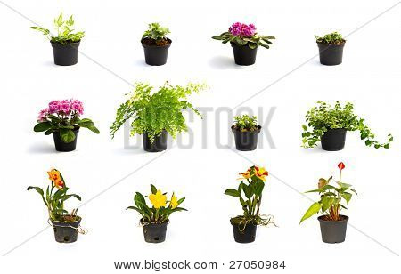Collection of Little plant in a black pot . Isolated on white background
