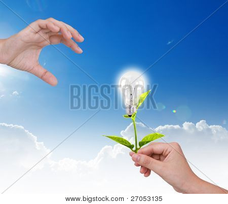 Light bulb with small plant  in hand