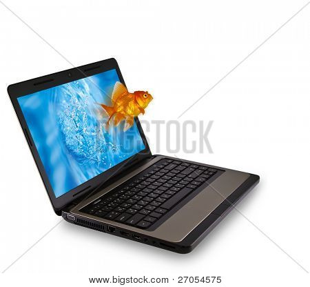 Gold fish jumping from Laptop isolated on white background
