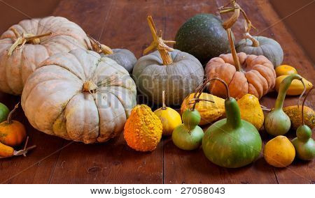Halloween pumpkin still life on wood table with various species