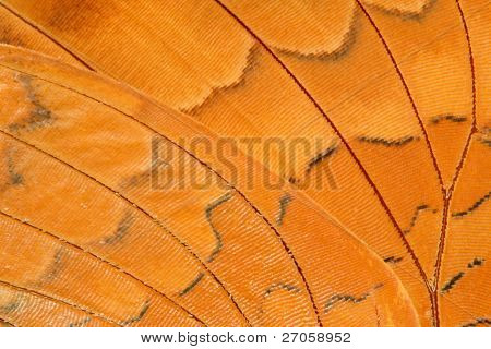 very close view of an alive tropical butterfly wing, Lan-sang national park, Thailand
