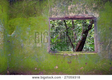 parede cobertas de musgo de prisão condenado tropical com janela para a selva densa, vietnam