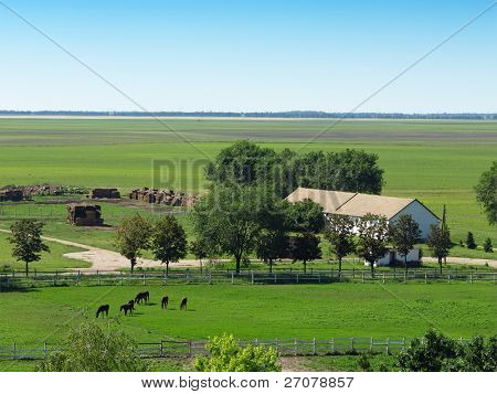 Horses on a ranch