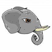 Elephant Icon. Vector Of An Elephant Head. Hand Drawn Elephant Head. poster