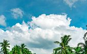 Beautiful Blue Sky And White Cumulus Clouds Against Coconut Tree In Happy And Chill Out Day. While A poster
