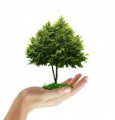image of bonsai tree  - hand plant  - JPG