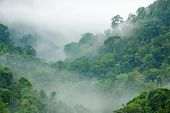 stock photo of canopy  - morning fog in dense tropical rainforest - JPG