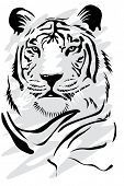 stock photo of white-tiger  - White tiger - JPG