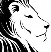 image of lions-head  - Lion head drawing - JPG