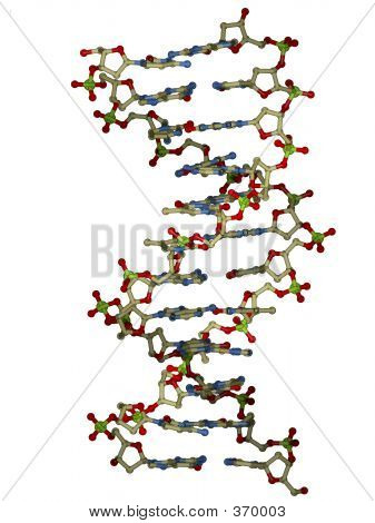 Double Helix DNA-Molekül