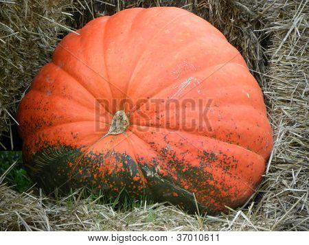 Pumpkin by Hay