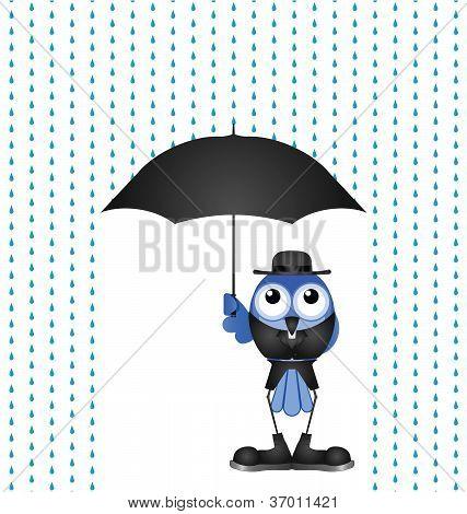 Vicar rain