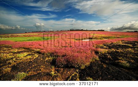 Beautiful Landscape of the flower field