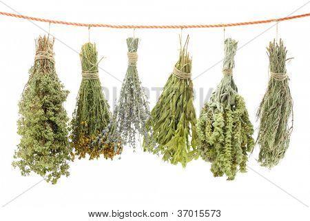 Variedade de ervas secas, pendurado em uma corda