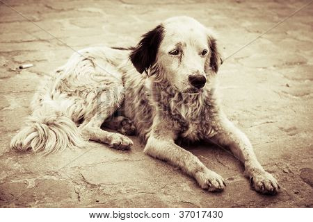 Homeless and hungry dog abandoned on the streets