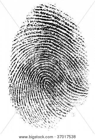 fingerprint pattern isolated on white