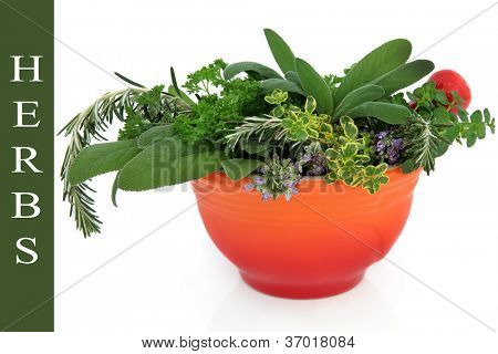 Herb leaf and flower sprigs in a red ceramic mortar with pestle over white background, with title description on green.