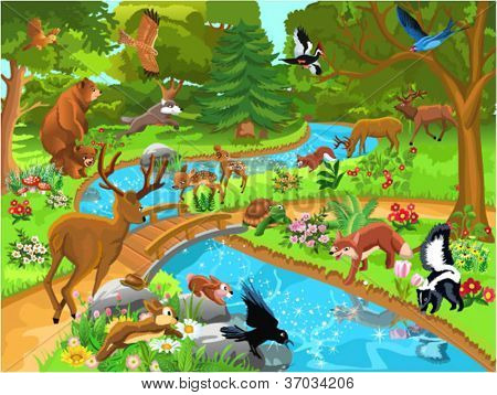 forest animals coming to drink water