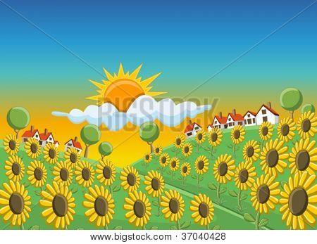 Pôr do sol sobre o campo de girassóis bela Colina Verde com casas