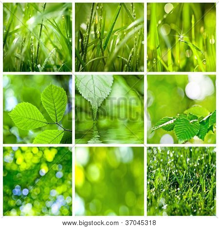 collection of green grass and leaves. Spring backgrounds