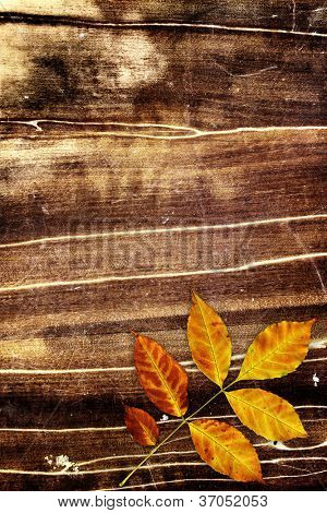 Grunge background with autumn leaf